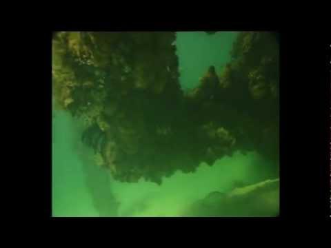 大堡礁意外拍摄到人鱼 (Mermaid be found in the Great Barrier Reef)