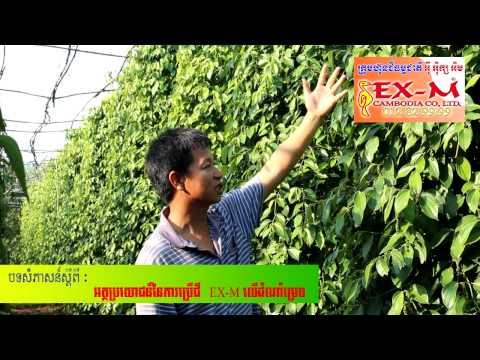 012829999 pepper tree