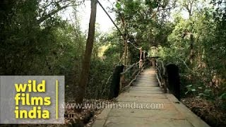 Wooden foot bridge of Ken River Lodge, Madhya Pradesh