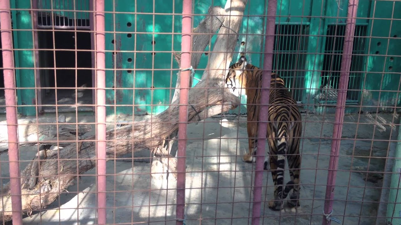 Dubai Zoo Youtube