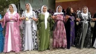 Şırnak Uludere Goyan Düğünleri - Daweta Kurda 2017 Video