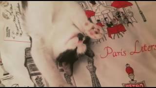 Ton ton kedi yumak