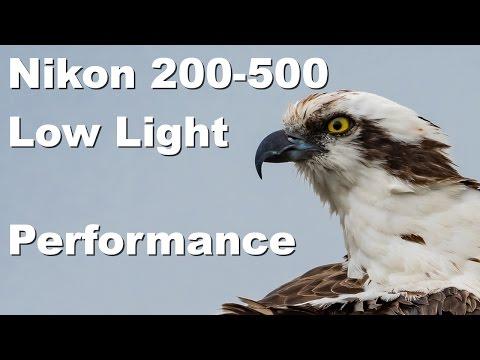 Lazy Wildlife / Birding Photography Viera Wetlands Florida Nikon 200-500mm Low Light Performance