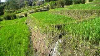 Sri Lanka,ශ්රී ලංකා,Ceylon,Beautiful Rice Paddy Terraces (02)
