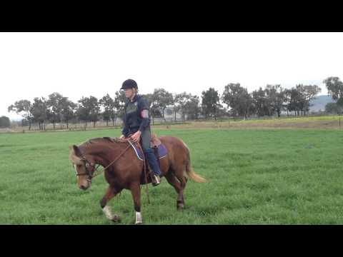 Charlie Pony For Sale Aberdeen Nsw