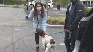 Reporter Busts Accused Dognapper on Live TV