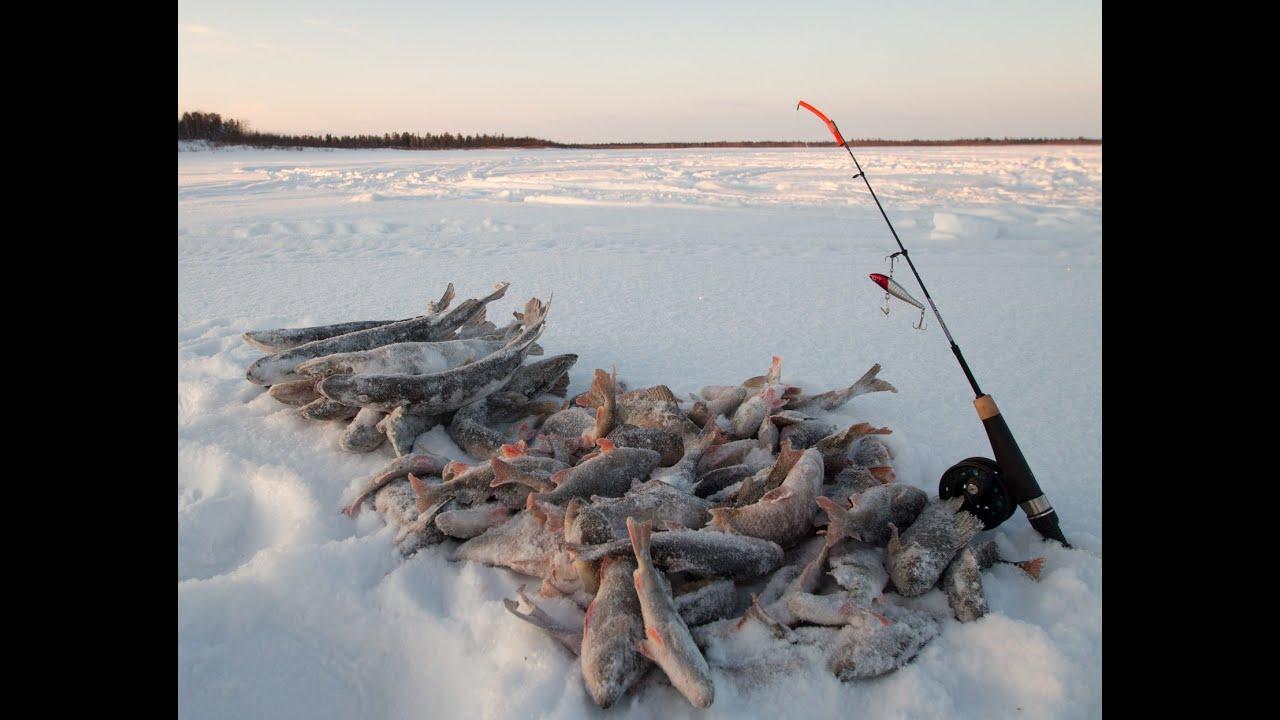 как ловить рыбу на ямале