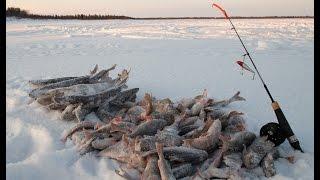 Зимняя рыбалка на оз.Негито. ЯНАО. Новый Уренгой. Ice fishing in Siberia.
