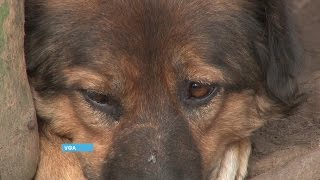 Уфимский приют для бездомных собак остался без денег