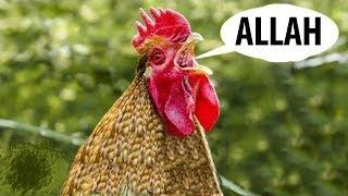 İZLEMEYEN KALMASIN  Allahı Zikreden İnanılmaz Hayvanlar.. Maşallah