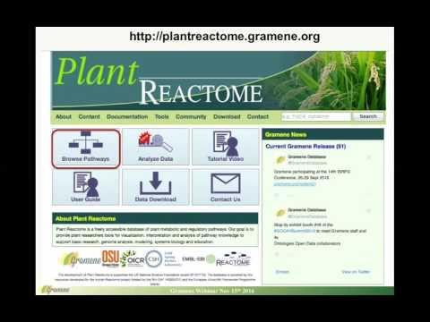 Nov 2016 webinar: Visualization of plant gene Expression Atlas data on Gramene