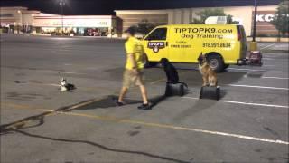 Aspen - Siberian Husky - Tulsa Dog Training