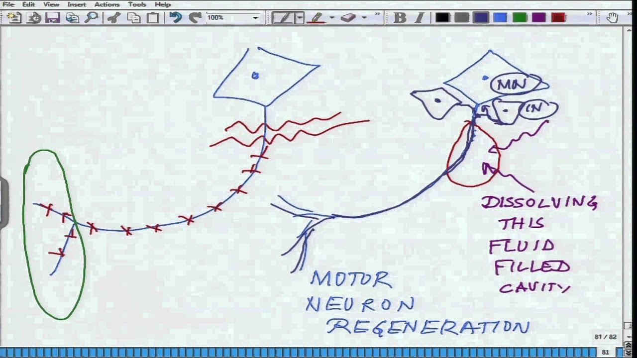 Mod-01 Lec-16 Animal Physiology