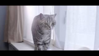 (2016) Whiskas (корм для кошек) - Любопытным от природы(, 2016-02-15T06:33:47.000Z)