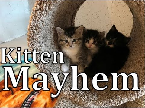 Kittens playing with cute kittens and play fighting