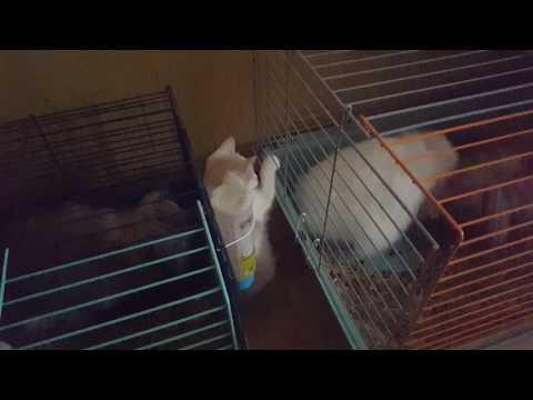 Онлайн видео: Лесби -