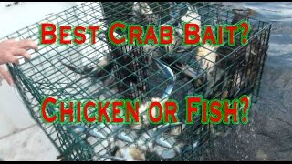 Repeat youtube video Catching Blue Claw Crabs: Chicken or fish for bait?