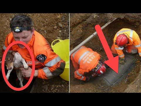These Guys Heard Noises In This Pipe. They Decided To Look Inside And… WOAH!