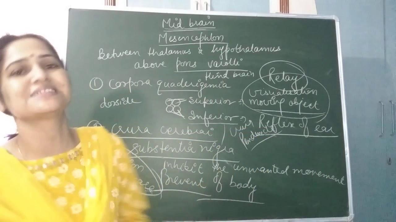 Midbrain and Hindbrain - YouTube