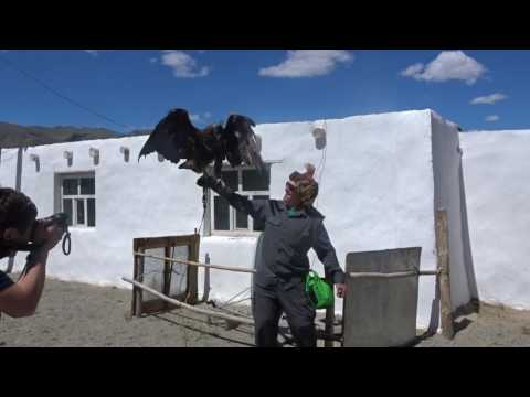 2017, June 3 - Alan holds an eagle in western Mongolia.  00072