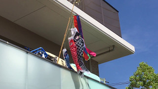 Koi-nobori (Carp Streamers): May 5th, Children's Day in Japan