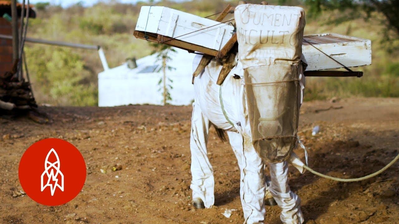 Brazil's Beekeeping Donkey
