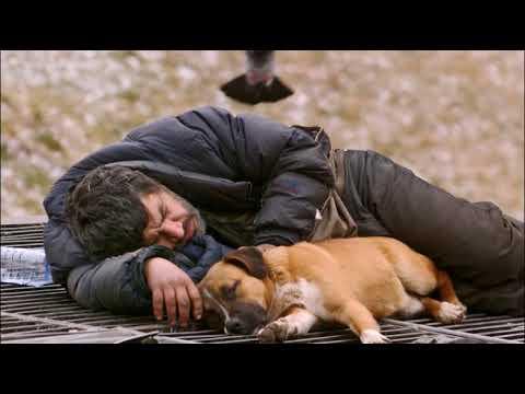 Бескорыстная любовь и преданность собак! Бездомные и их псы The homeless and their dogs