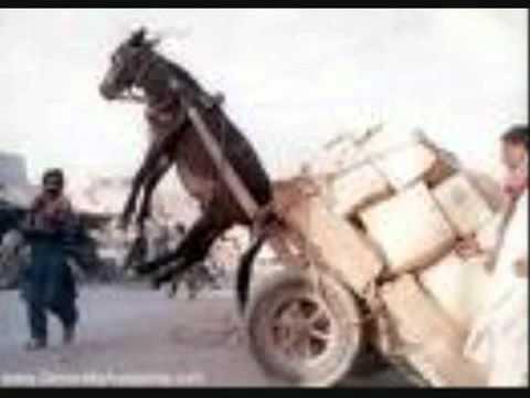 69 boyz- let me ride that donkey