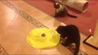 Cats Playing Meow Yellow Undercover Moving Mouse