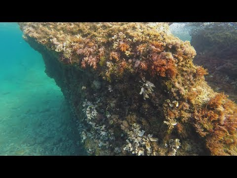 Supetar (underwater views - from the open sea) | GoPro