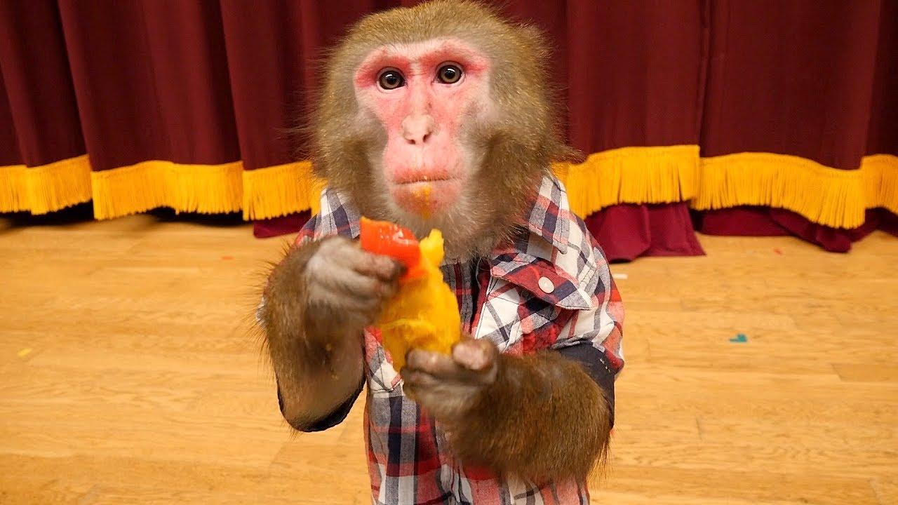 お猿のカイくん,ついにコロロに飽きる。 - YouTube