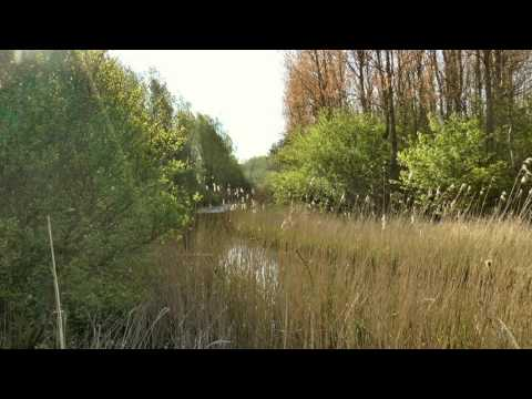 🌳Nature Sounds: Dutch Morning Forest with Birds Singing and Insects Buzzing [SLEEP, RELAX or STUDY]