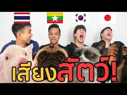 เสียงสัตว์ในแต่ละประเทศต่างๆ เกาหลี ญี่ปุ่น พม่า ไทย