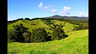 Kaitaia Surrounds - Very Handy Run-Off/Lifestyle  ...
