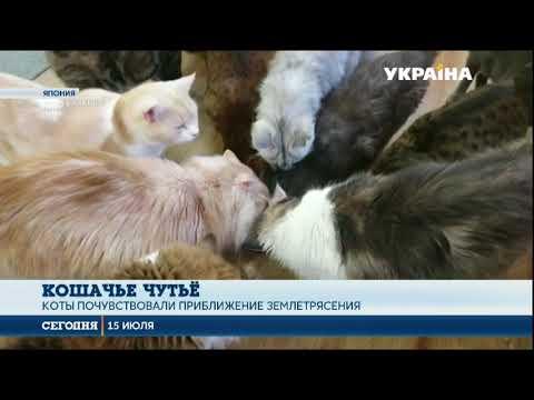 Как домашние животные реагируют на землетрясения