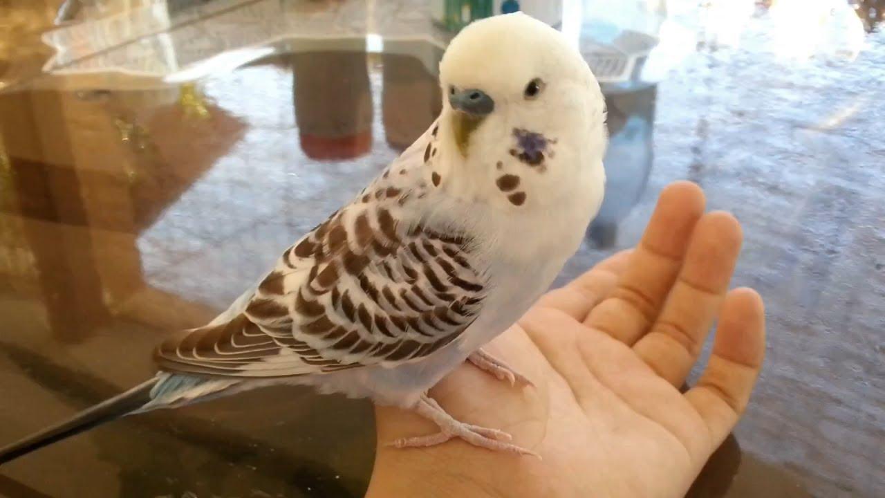 birdie sitting on my hand