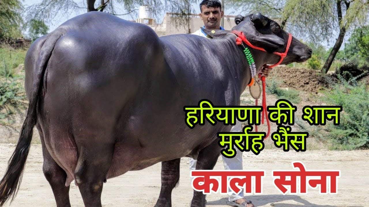 Visit to Hisar Bovine Sperm Station & Research Center by