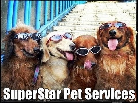 Summerlin-Las Vegas Dog Sitting SuperStar Pet Services with Emcee and Max on Mothers Day
