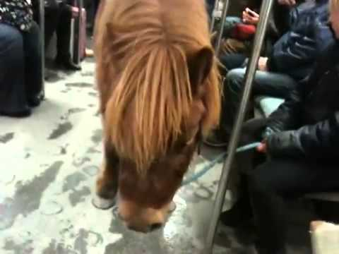 A pony travelling with S-Bahn (metro) in Berlin