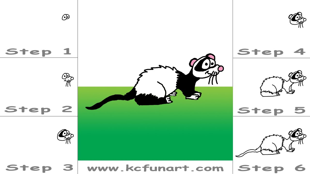 101 how to draw a cartoon ferret