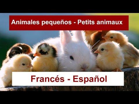 francés-español-animales---apprendre-à-dire-les-animaux-en-espagnol