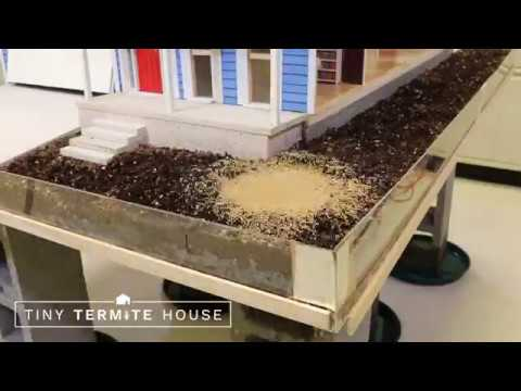 Tiny Termite House