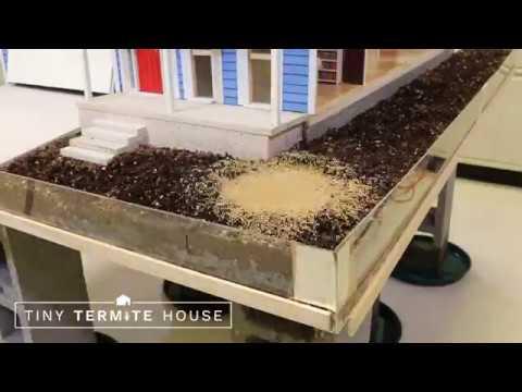 Termites Dumped Into Tiny Termite House