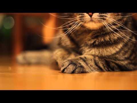 Trilling Cat