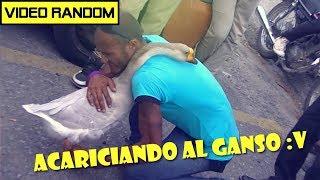 El ganso mas inteligente del mundo !  Video Viral
