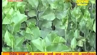 Ayurvedic Medicine Naagdon (नागदोन )Part 1 -Acharya Balkrishna thumbnail