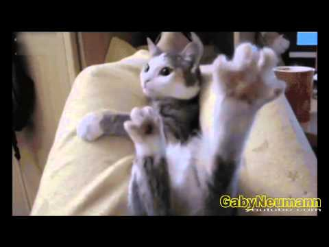 Funny Videos Absolutely Hilarious | Funny Cats Videos | Funny Cats #22
