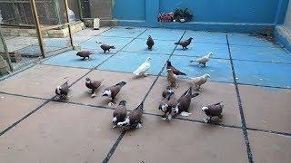 أحسن طريقة لمنع الطيور 🕊️ من النزول على بيت الجيران 👍