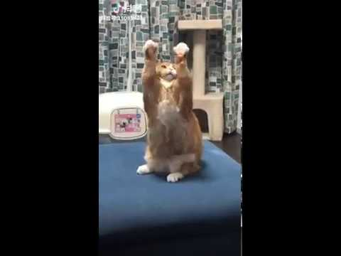 Cat Series: Cat's weird movement