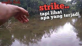 Casting ikan gabus,snakehead saat strike malah ini yang terjadi